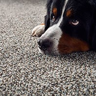 Mollies Turn | Flooring 101