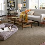 Living room with rug and dog | Flooring 101