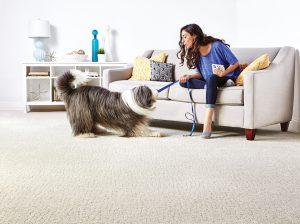 Big dog pulling on leash in models hand | Flooring 101