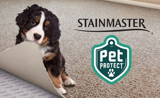 Stainmaster | Flooring 101