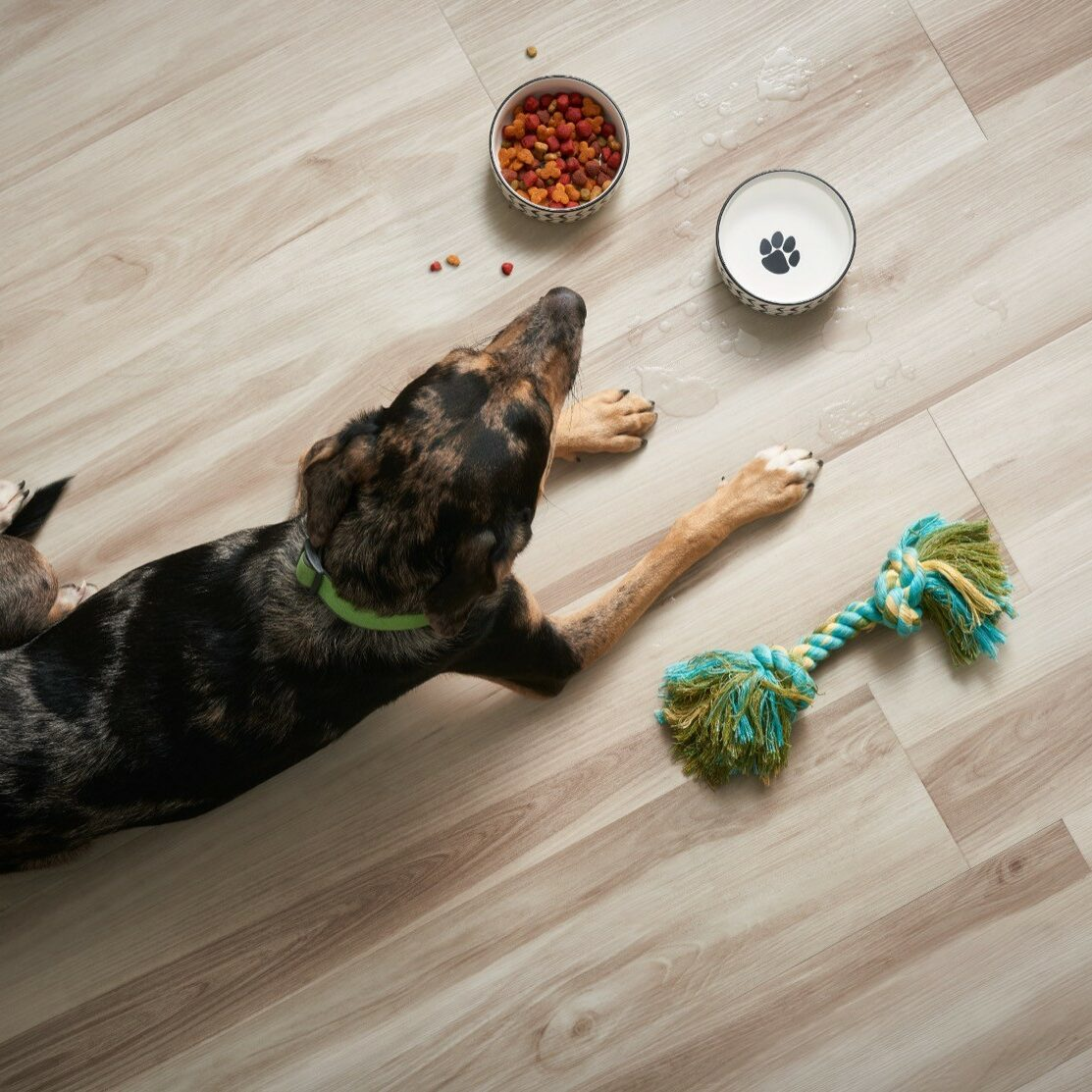 Dog on floor | Flooring 101